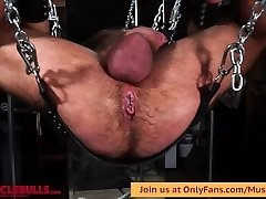 Humungous MUSCLE BULL ON SLING WITH WRECKED HOLE FROM A GOOD Hard-on & DILDO FUCKING