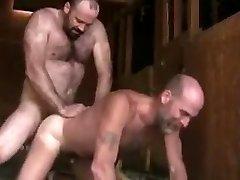 Horny Bears Drilling
