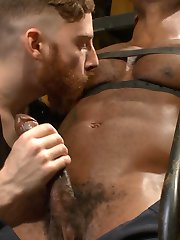 Osiris Blade just started as a production assistant with KinkMen, so Sebastian shows him around the Armory. When they get to main storage room for the sex toys and bondage restraints, Osiris can't help but let his horny curiosity get the best of him. He lets Sebastian belt his cut body down to wheeled staircase for an edging session. Sebastian cuts off Osiris' briefs to reveal an impossibly large cock, ten inches at least. Discovering that Osiris' nipples are hardwired to his dick, Sebastian works up a raging hard-on on the stud just by pinching and vibrating his nipples. Osiris moans and begs to cum as Sebastian runs two hitachis over his gigantic, pulsing dick. Sebastian ties Osiris up over a fuck box and edges him repeatedly with the toys he finds nearby, inserting a dildo deep within Osiris to heighten the pleasure. He stands Osiris up and finally milks a bucket full of cum from his firehose of dick.