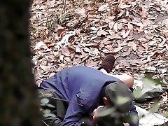 Madeiras Série - floresta selvagem