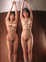Whip Shibari bondage tgp asian